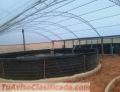 instalallation-of-fish-breeding-tanks-instalacion-de-tanques-para-cria-de-peces-2.jpg