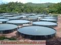 instalallation-of-fish-breeding-tanks-instalacion-de-tanques-para-cria-de-peces-4.jpg