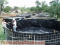 Instalallation of fish breeding tanks / Instalacion de tanques para cria de peces