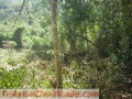 Vendo 6000 M2 De Terreno En Venezuela ,sierra Del Edo Falcon
