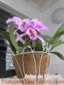 orquideas-cultivadas-en-casa-8239-3.jpg