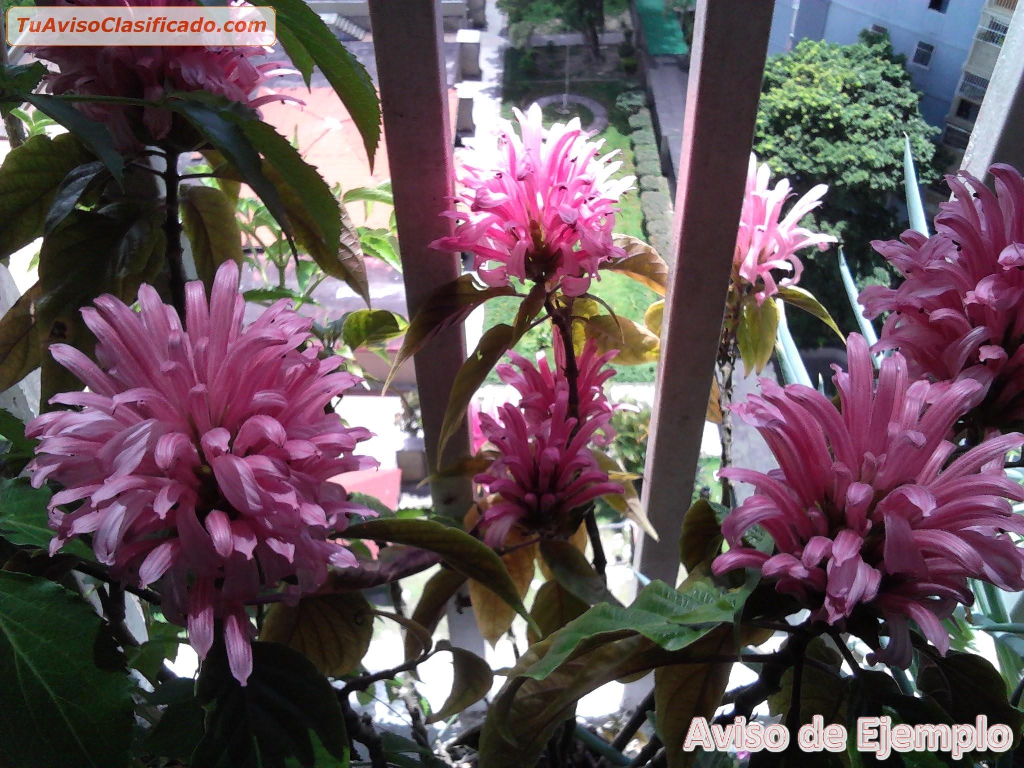 Plantas y semillas de jard n y viveros en for Viveros de plantas en concepcion